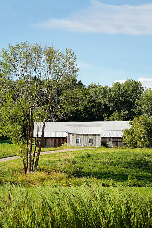 Old barn on hill in summer by Sandra Cunningham for Stocksy United