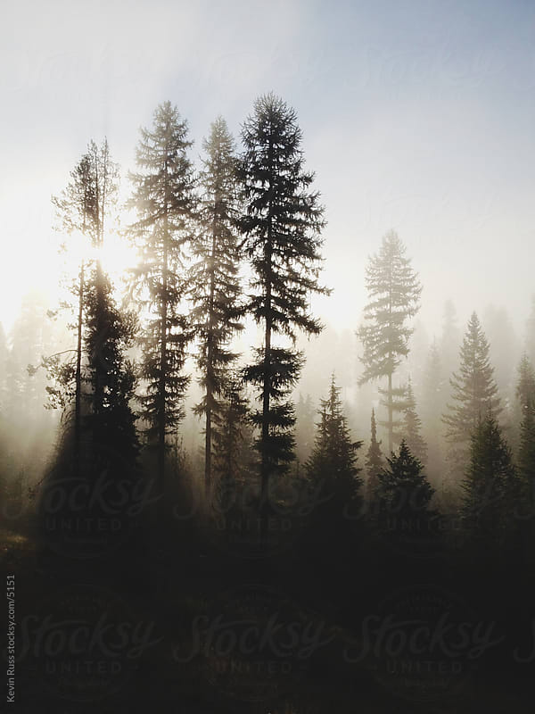 Light Forest Fog by Kevin Russ for Stocksy United