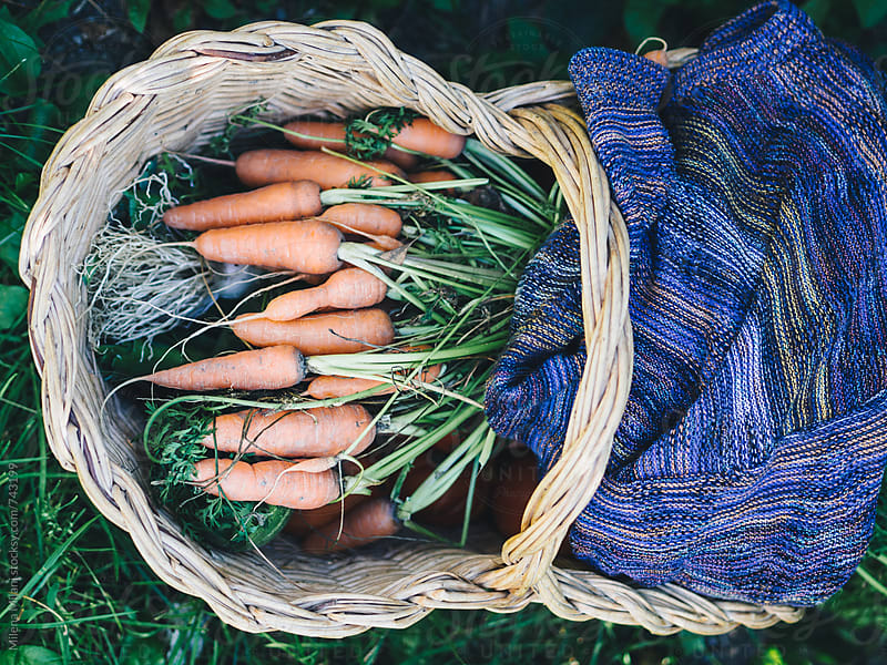 Wicker basket full of carrots by Milena Milani for Stocksy United