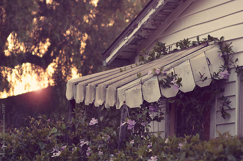 Rustic home with purple flowering vines on a tin awning in afternoon sun by Rachel Bellinsky for Stocksy United