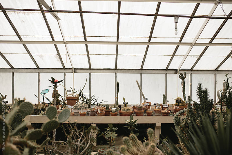 table of potted plants in greenhouse by Nicole Mason for Stocksy United