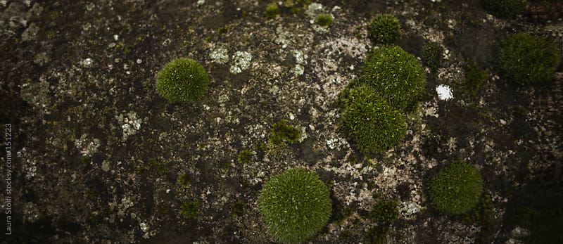 Detail of covered in moss ancient stone wall seen from above by Laura Stolfi for Stocksy United