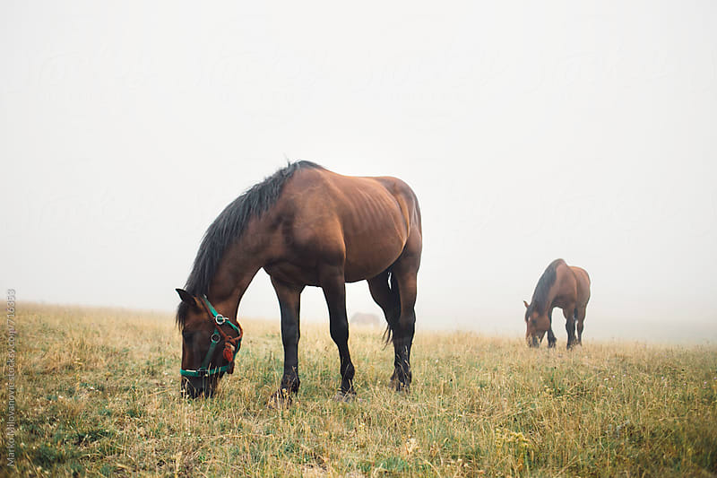 Horse on the foggy mountain by Marko Milovanović for Stocksy United