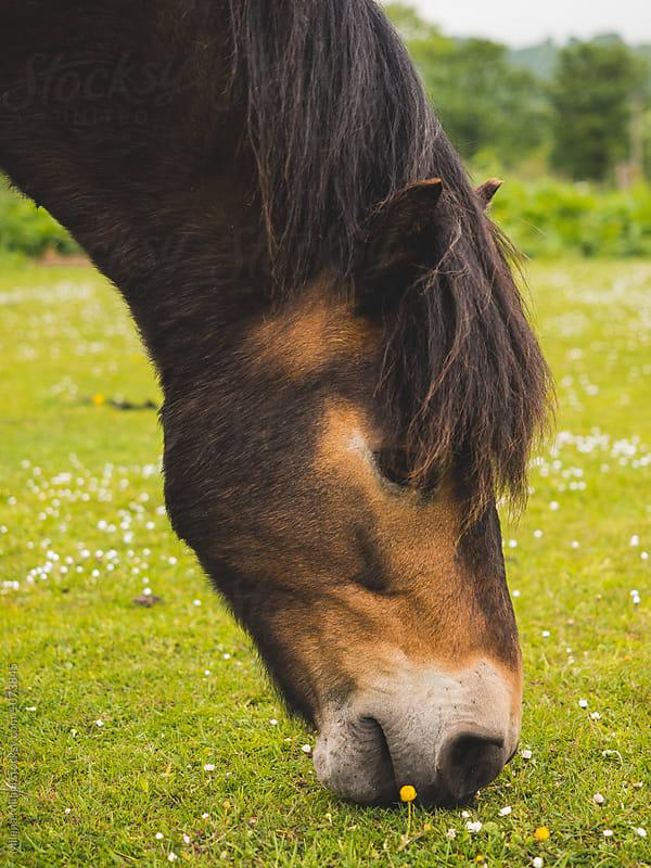 Horse head by Milena Milani for Stocksy United