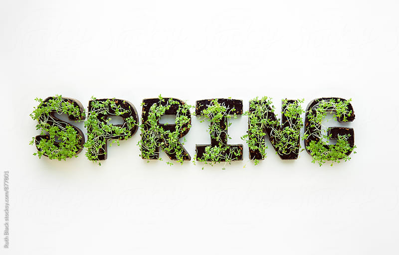 Seedlings forming the word spring by Ruth Black for Stocksy United