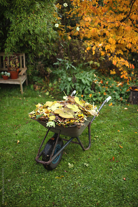 autumn leaves in wheelbarrow in a garden in fall by Marcel for Stocksy United