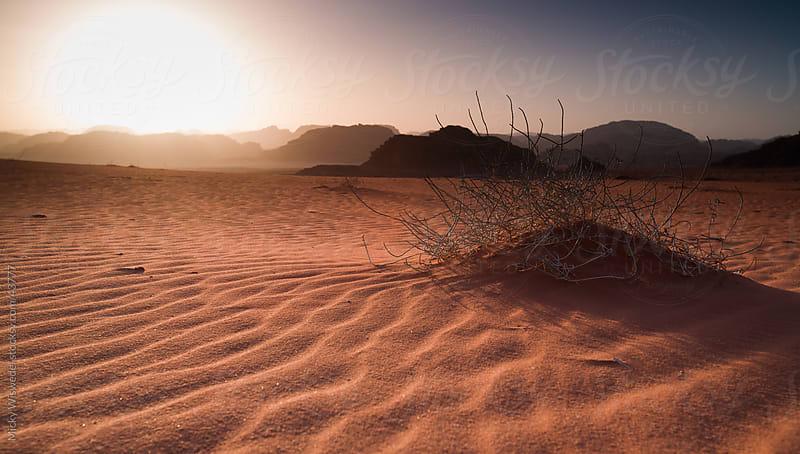 Desert sunset Wadi Rum, Jordan by Micky Wiswedel for Stocksy United