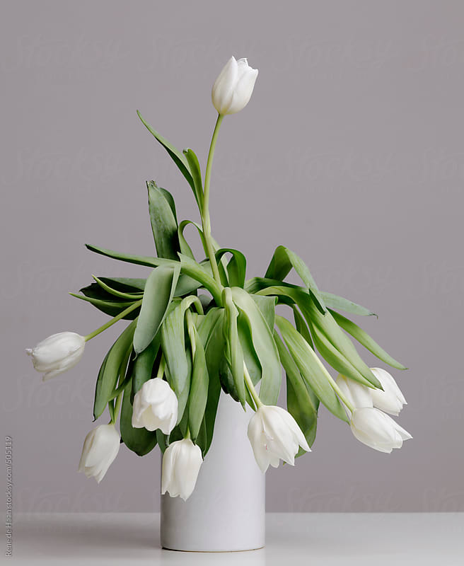 withering white tulips by Rene de Haan for Stocksy United