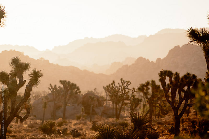 Desert Palette by Christian McLeod for Stocksy United
