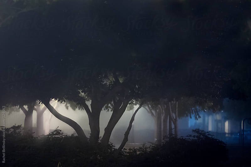 A tree is silhouetted in a misty park at night by Rachel Bellinsky for Stocksy United