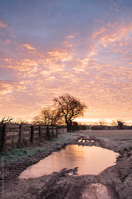 Frozen farm track at sunrise. Cressingham, Norfolk, UK. by Liam Grant for Stocksy United