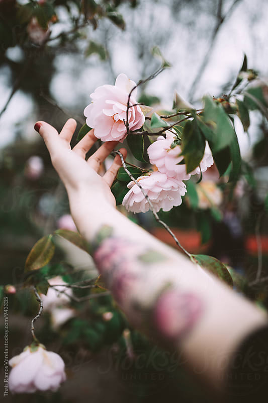 touching camellia flowers by Thais Ramos Varela for Stocksy United