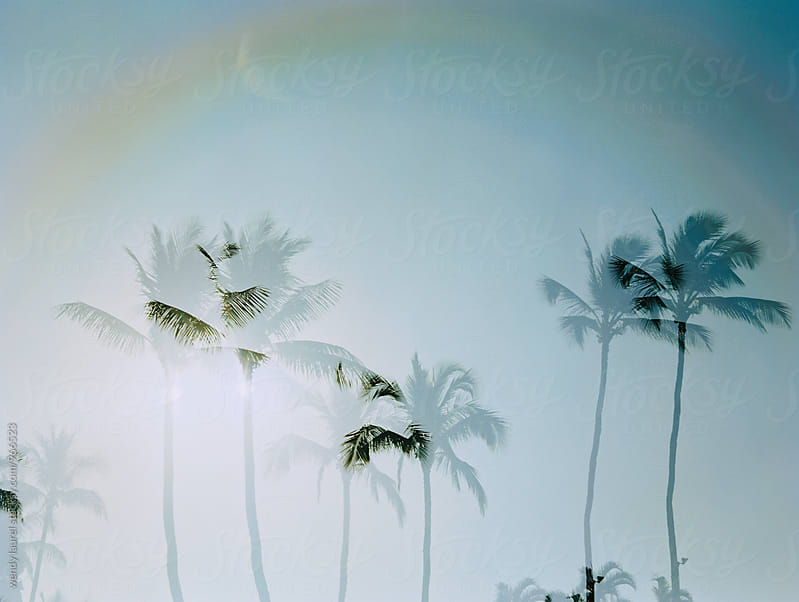 double exposure with rainbow and palm trees and sunshine by wendy laurel for Stocksy United