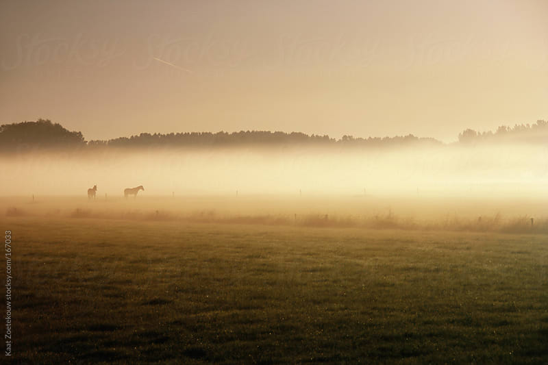 A foggy sunlit grass landscape featuring silhouetted horses, in The Netherlands.  by Kaat Zoetekouw for Stocksy United