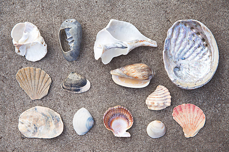 a collection of sea shells found at the beach by Natalie JEFFCOTT for Stocksy United
