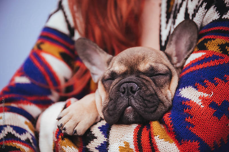Baby french bulldog by Danny Pellissier for Stocksy United