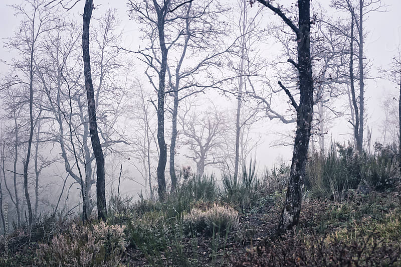 Misty forest with bare trees by Simone Becchetti for Stocksy United
