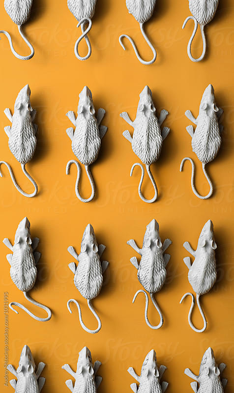 White rats/mouses on orange background.toy/replica by Audrey Shtecinjo for Stocksy United