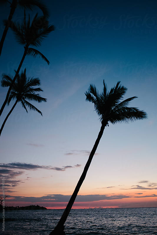 Hawaii sunset with palm trees  by Matthew Linker for Stocksy United