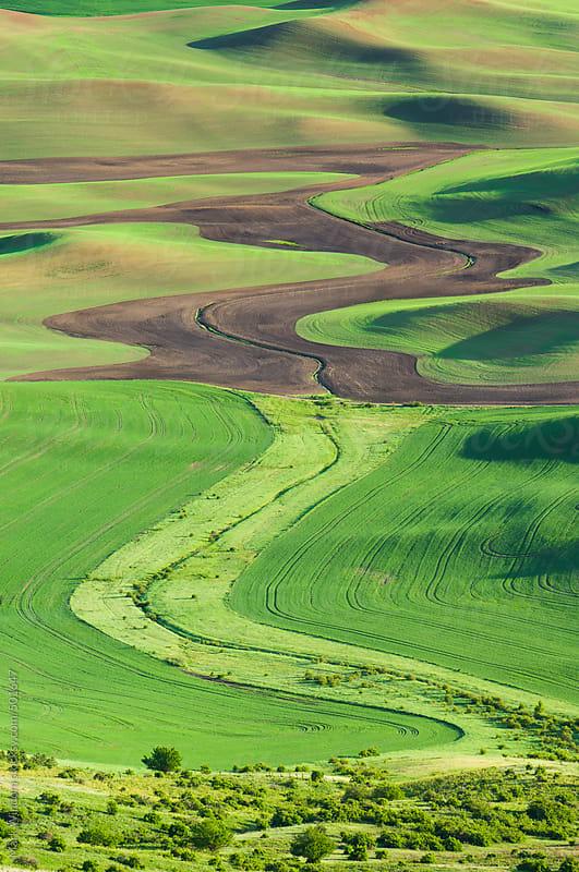 Wheat farmland in Spring by Mark Windom for Stocksy United