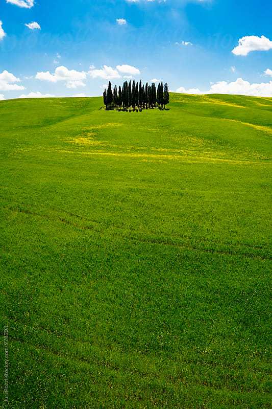 Tuscany hills in spring by Juri Pozzi for Stocksy United