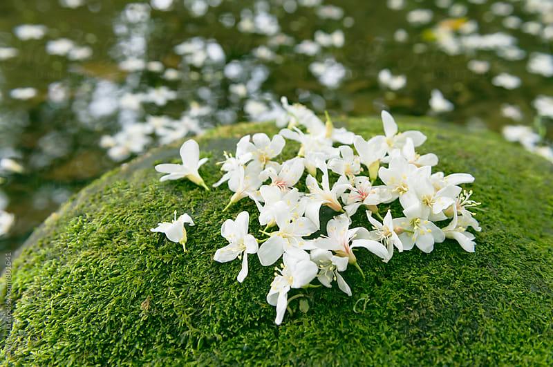 Delicate white flowers in a heart shape by Lawren Lu for Stocksy United
