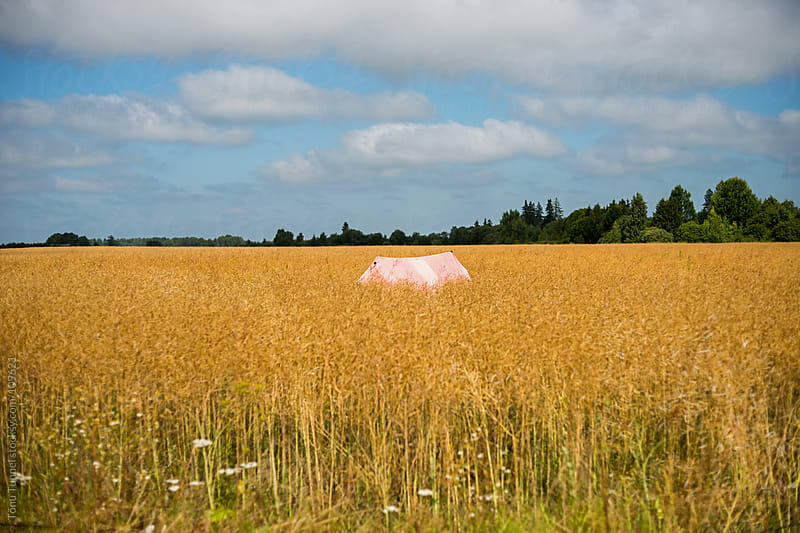 Camping in a field by Tõnu Tunnel for Stocksy United