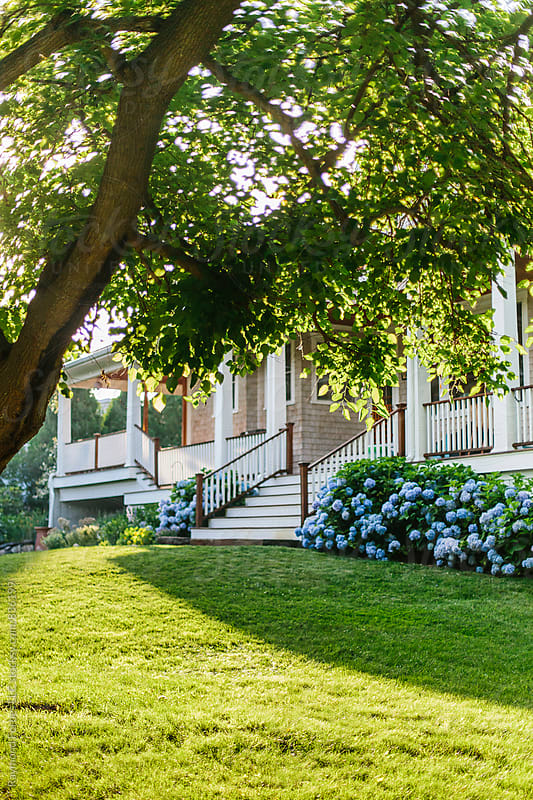 Hydrangea Mid Summer New England by Raymond Forbes LLC for Stocksy United
