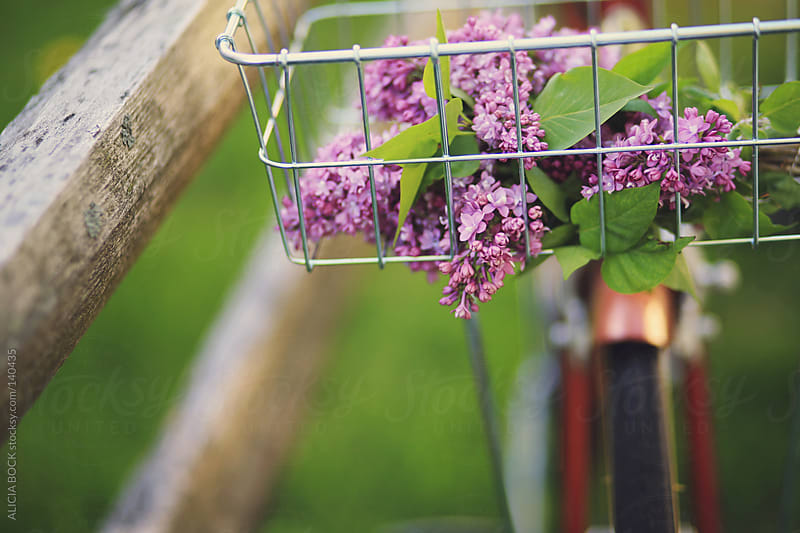 Bike With Lilacs - Horizontal by ALICIA BOCK for Stocksy United