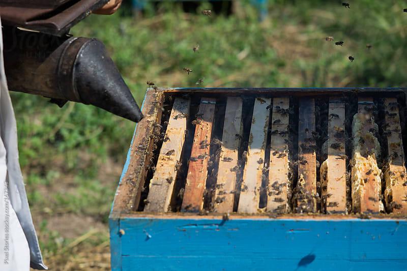 Beekeeper smoking bees by Pixel Stories for Stocksy United