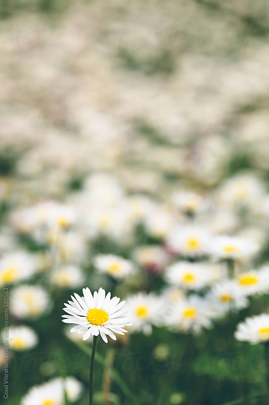Spring Flowers by Good Vibrations Images for Stocksy United