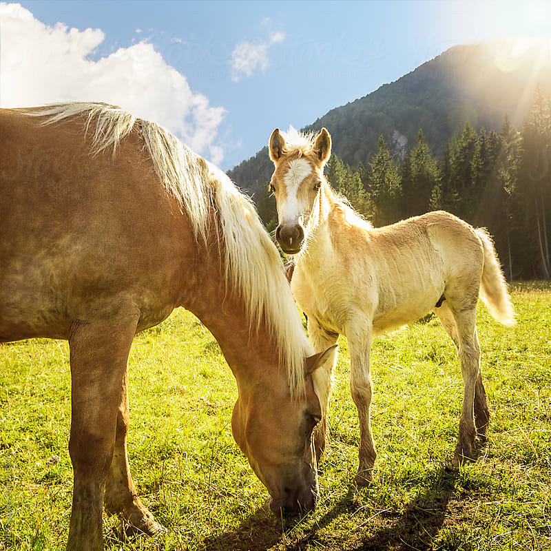 Horse and her baby. Mountain Scene by HEX. for Stocksy United