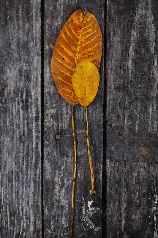 Leaves by Jovana Vukotic for Stocksy United