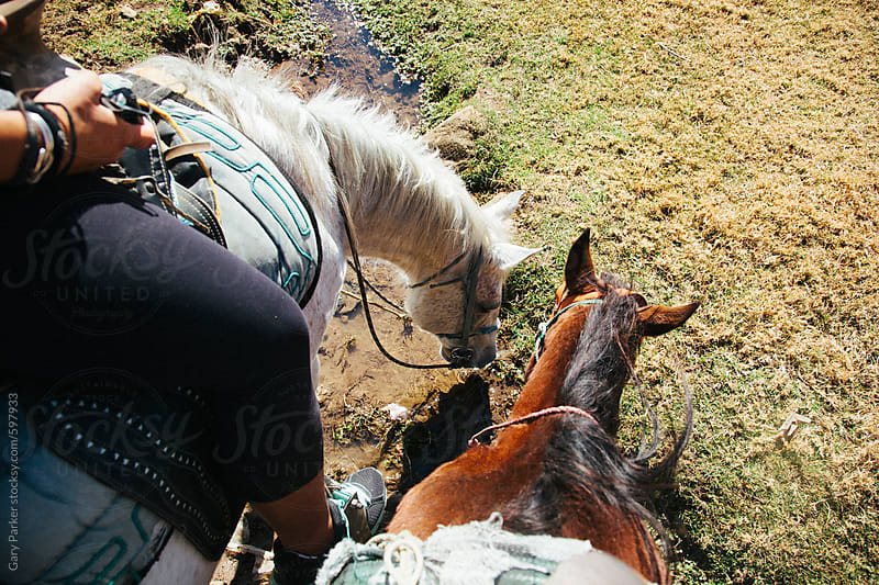 Two horses feeding on some grass from the riders perspective by Gary Parker for Stocksy United