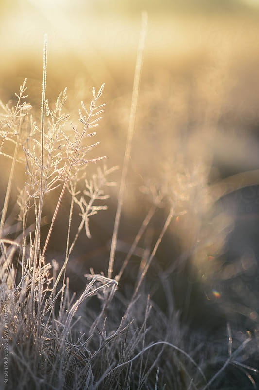 Grass covered in frost by Kirstin Mckee for Stocksy United