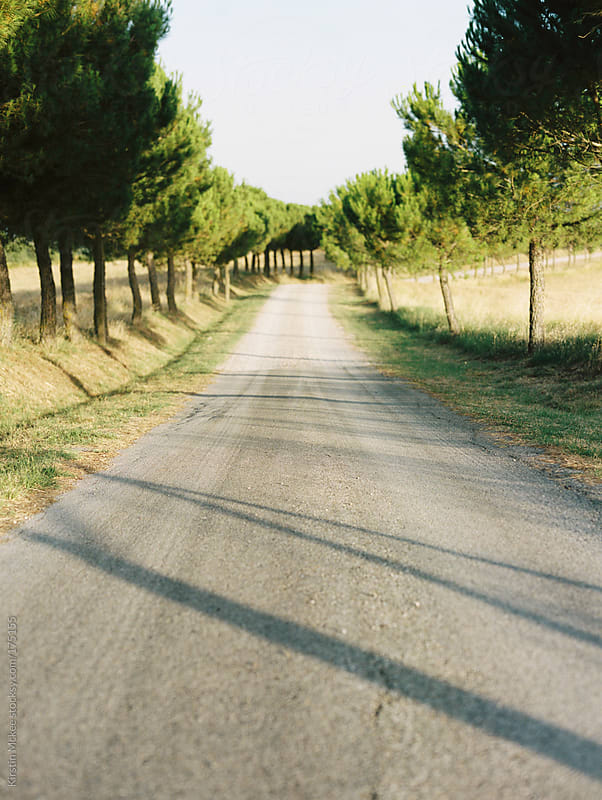 Tree-lined road in Tuscany by Kirstin Mckee for Stocksy United