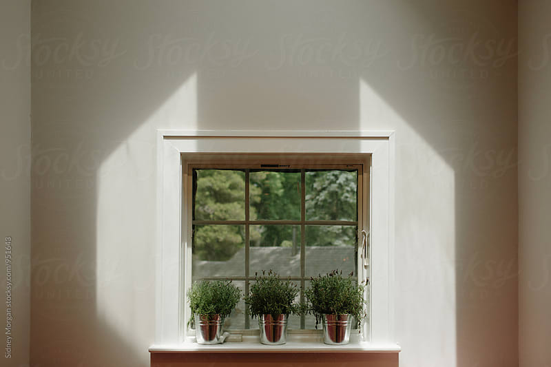 Windowsill Plants by Sidney Morgan for Stocksy United