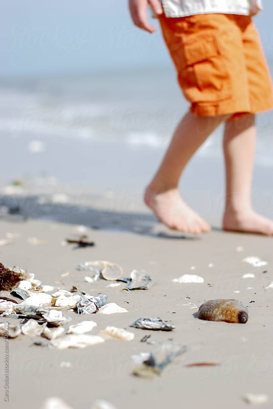 Boy walking on a beach discovers shells and a sea cucumber by Cara Dolan for Stocksy United