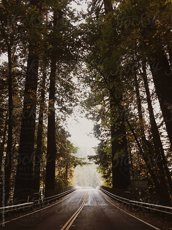 Driving through the forest by Dylan M Howell Photography for Stocksy United