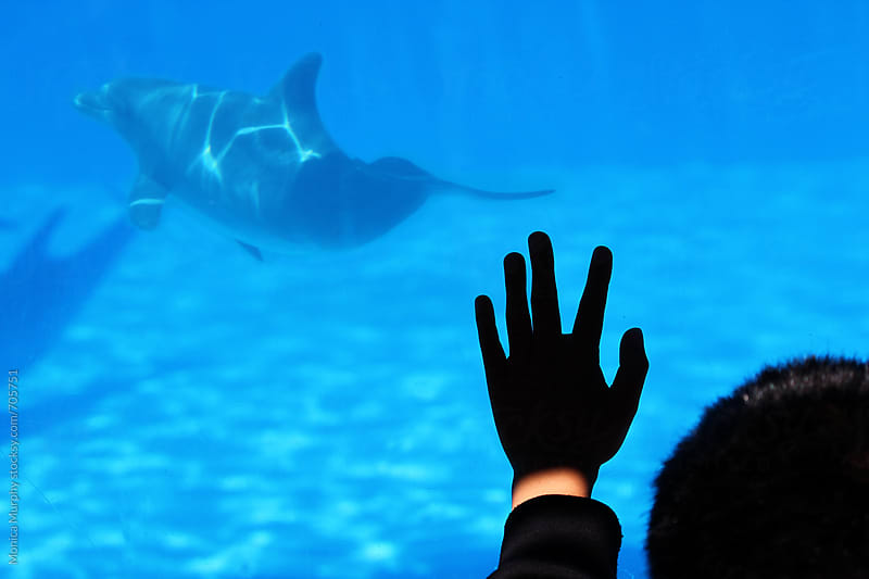 Child's hand on the Dolphin Tank at Aquarium by Monica Murphy for Stocksy United