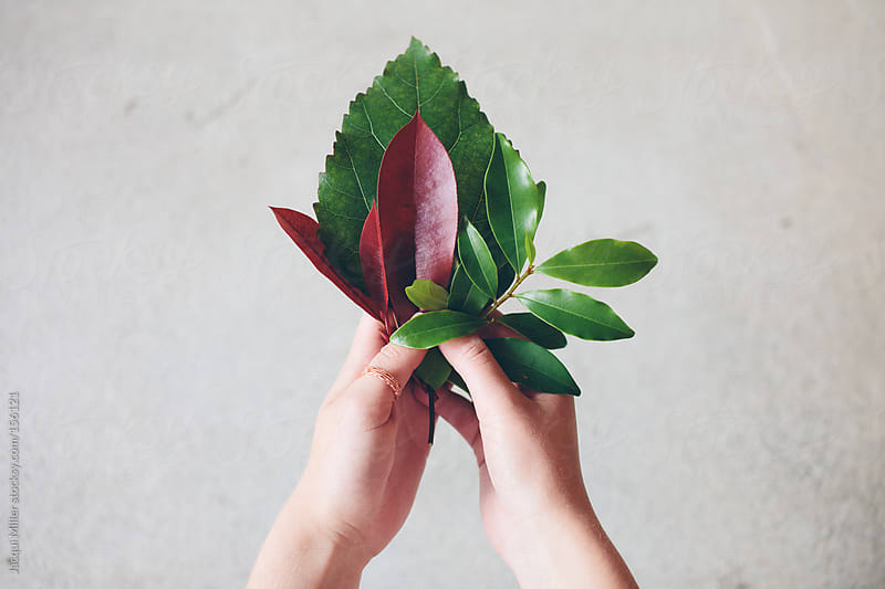 Hands holding a selection of green and red leaves by Jacqui Miller for Stocksy United