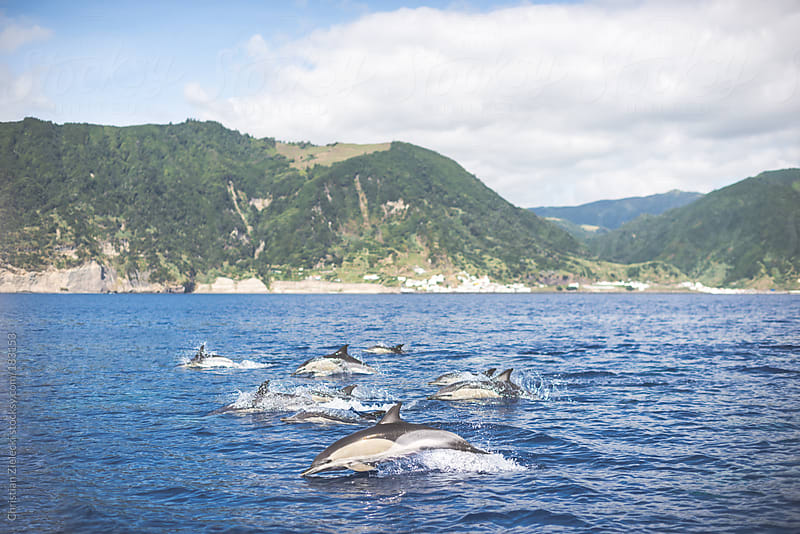 jumping dolphins before a coast by Christian Zielecki for Stocksy United