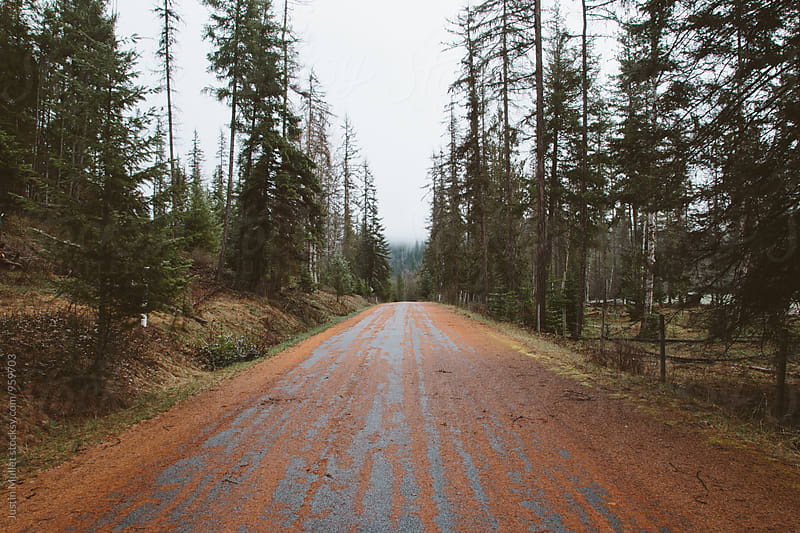 Road covered with red pine needles.  by Justin Mullet for Stocksy United