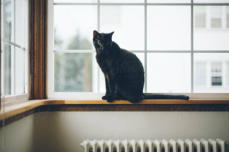 Black Cat in a Window by Briana Morrison for Stocksy United