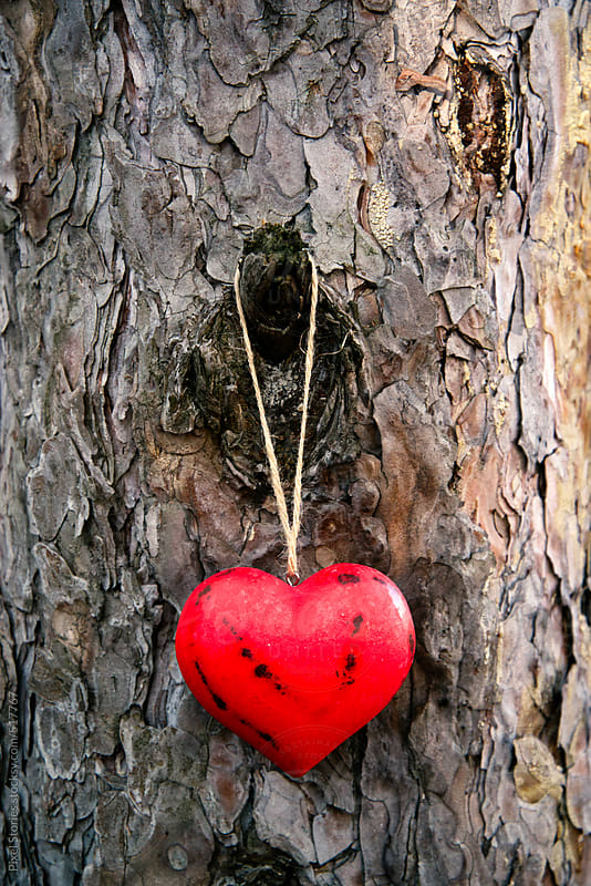 Red wooden heart on tree by Pixel Stories for Stocksy United