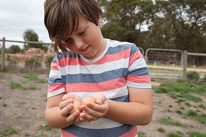 A young boy collecting farm fresh, free range eggs on a hobby farm by Natalie JEFFCOTT for Stocksy United