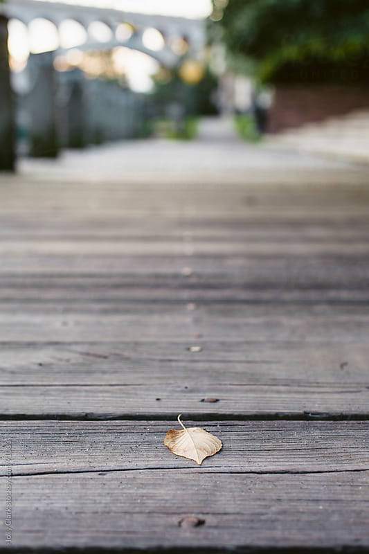 A leaf sits facedown on a wooden city path. by Holly Clark for Stocksy United