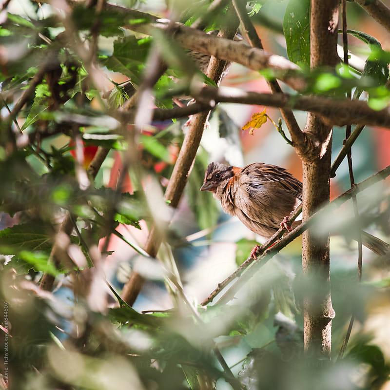Sparrow sitting on a branch by Gabriel Tichy for Stocksy United
