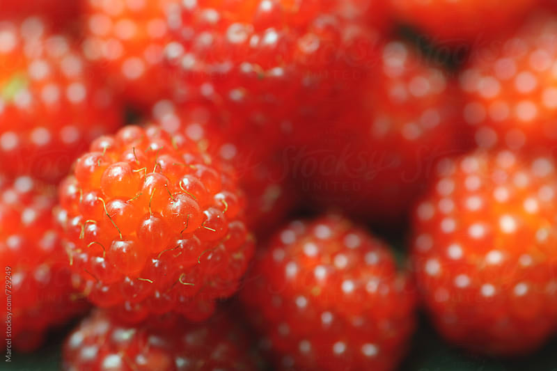 Japanese wineberries harvested in the garden by Marcel for Stocksy United