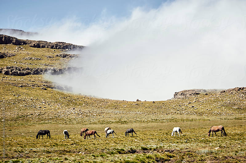 A band of horses grassing in a misty mountain grass field. by Jacques van Zyl for Stocksy United